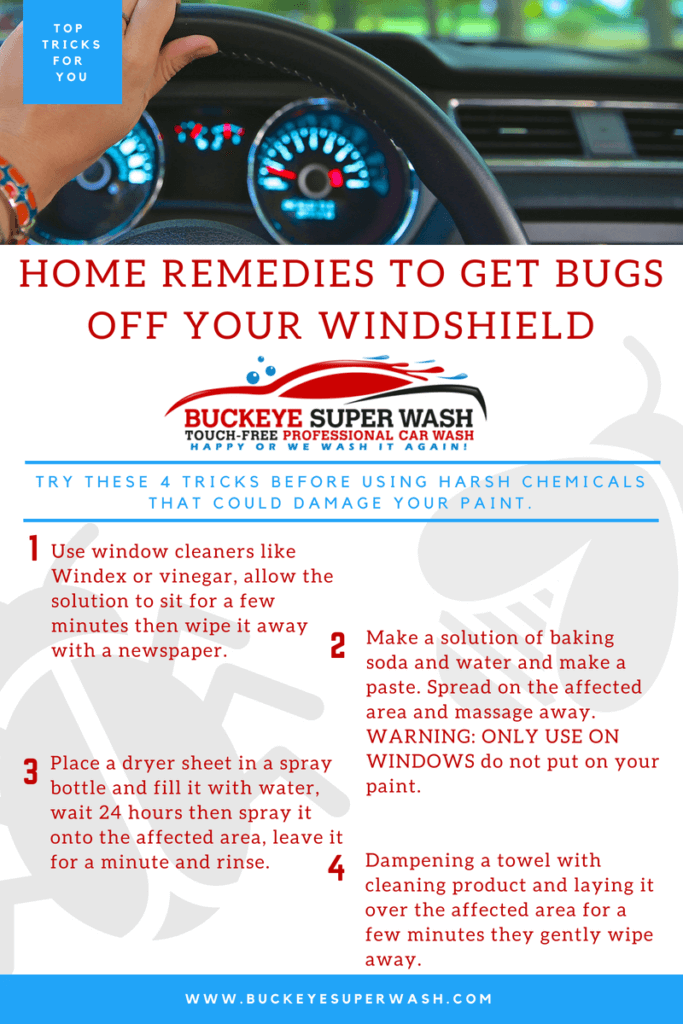 BUGS VS Your Windshield